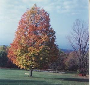 Peapack, New Jersey tree