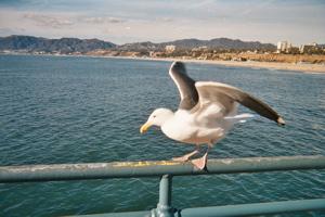 buddy taking flight