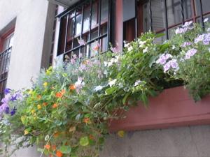 New York City windowbox
