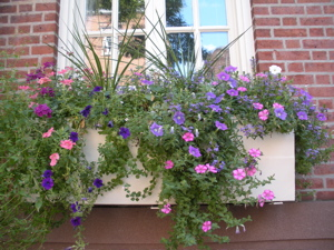 New York City windowbox