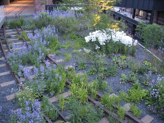 The High Line, June 2009