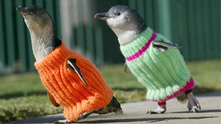 Penguin sweater cuteness