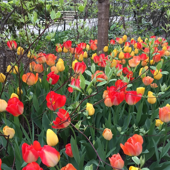 Gramercy Park tulips
