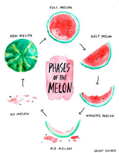 Melon Phases