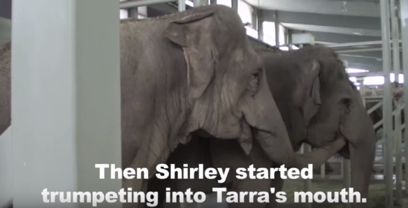 Shirley and Tarra, BFFs